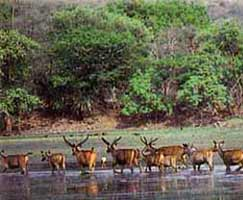 Tour Package Sariska