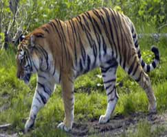 Sariska Travel Package